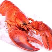 沪泽 加拿大进口 熟加拿大龙虾 3只(约1kg)